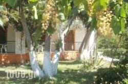 Studios Dimitris in Skiathos Chora, Skiathos, Sporades Islands