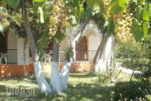 Studios Dimitris_accommodation_in_Hotel_Sporades Islands_Skiathos_Skiathoshora