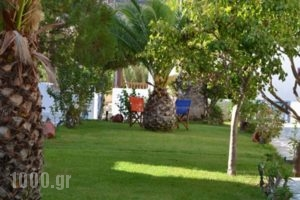 Maistrali Studios_holidays_in_Hotel_Cyclades Islands_Andros_Andros City