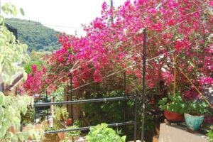 Rapanos Apartments_best prices_in_Apartment_Ionian Islands_Corfu_Palaeokastritsa