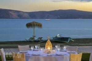 Makis Inn Resort_holidays_in_Hotel_Peloponesse_Argolida_Ermioni