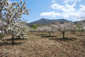 Arodamos Traditional Hostels_best deals_Room_Crete_Heraklion_Kroussonas