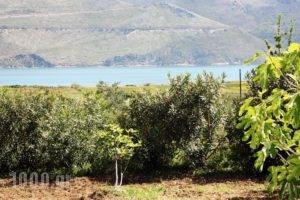 Studio Thea_holidays_in_Hotel_Ionian Islands_Kefalonia_Kefalonia'st Areas