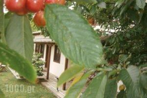 Gardenia Studios_best deals_Hotel_Thessaly_Magnesia_Mouresi