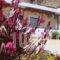 Joanna Studios_travel_packages_in_Crete_Rethymnon_Plakias
