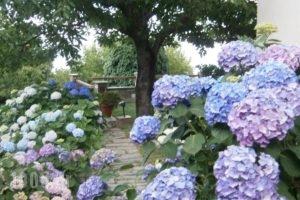 Gardenia Studios_holidays_in_Hotel_Thessaly_Magnesia_Mouresi