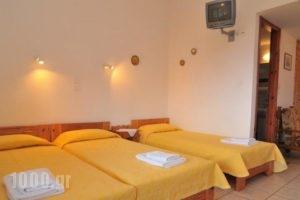 Studios Stefania_holidays_in_Hotel_Aegean Islands_Thasos_Chrysi Ammoudia