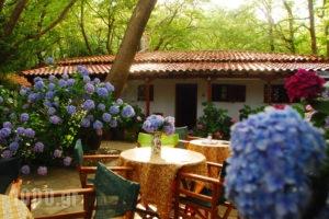 Tasoula Parselia_best deals_Hotel_Aegean Islands_Samothraki_Therma