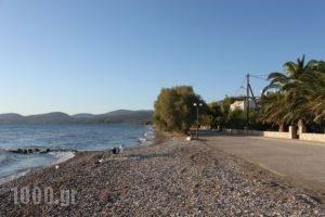 Finikas_lowest prices_in_Apartment_Peloponesse_Argolida_Nafplio