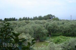 Xanthoula Studios_best prices_in_Hotel_Aegean Islands_Thasos_Thasos Chora