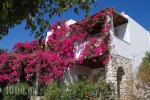 Kelly'S_accommodation_in_Hotel_Cyclades Islands_Antiparos_Antiparos Chora