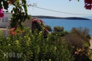 Kelly'S_lowest prices_in_Hotel_Cyclades Islands_Antiparos_Antiparos Chora