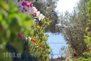 Kelly'S_best prices_in_Hotel_Cyclades Islands_Antiparos_Antiparos Chora