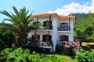 Pension Marina_accommodation_in_Hotel_Aegean Islands_Thassos_Thassos Chora