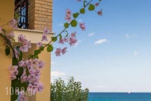 Calypso Studios_holidays_in_Hotel_Ionian Islands_Zakinthos_Zakinthos Rest Areas