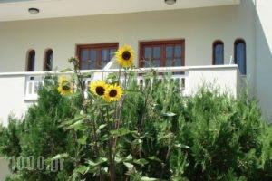 Seagull Studios_holidays_in_Hotel_Crete_Heraklion_Malia
