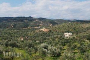Elaionas Studios_lowest prices_in_Hotel_Peloponesse_Lakonia_Skoutari
