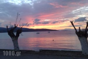 Gikas Apartments_holidays_in_Apartment_Central Greece_Evia_Krya Vrysi
