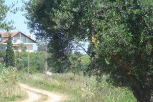 Villa Georgina B&B_accommodation_in_Villa_Peloponesse_Ilia_Pyrgos