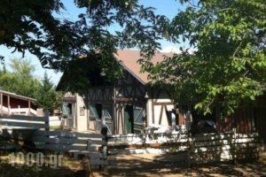 Vasiliki Mountain Farm & Retreat_best deals_Hotel_Central Greece_Fthiotida_Pavliani