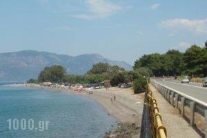 Zeus Village_lowest prices_in_Hotel_Central Greece_Fokida_Gravia