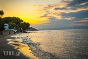 Villa Teresa_travel_packages_in_Aegean Islands_Thasos_Thasos Chora