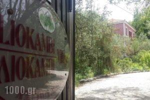 Liokambi Village Bungalows_accommodation_in_Hotel_Aegean Islands_Lesvos_Mythimna (Molyvos)