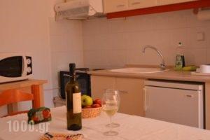 Victor Eleni Hotel_best deals_Hotel_Macedonia_Halkidiki_Haniotis - Chaniotis