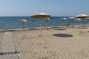 Mikiverna Houses & Apartments_holidays_in_Apartment_Macedonia_Halkidiki_Poligyros