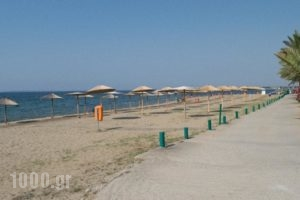 Mikiverna Houses & Apartments_best prices_in_Apartment_Macedonia_Halkidiki_Poligyros