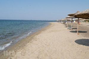 Mikiverna Houses & Apartments_accommodation_in_Apartment_Macedonia_Halkidiki_Poligyros