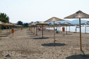 Mikiverna Houses & Apartments_travel_packages_in_Macedonia_Halkidiki_Poligyros