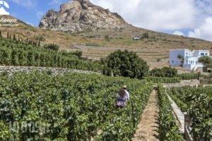 Crossroads Inn Traditional Lodging_best deals_Hotel_Cyclades Islands_Syros_Syros Chora