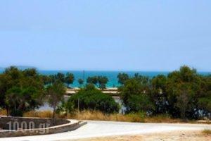 Asteras_lowest prices_in_Hotel_Cyclades Islands_Antiparos_Antiparos Chora