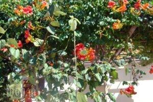 Vatellis Villas_lowest prices_in_Villa_Sporades Islands_Alonnisos_Alonissosora