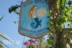 Studios Villa Lontorfou in Syros Rest Areas, Syros, Cyclades Islands