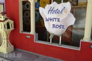 Hotel White Rose Beach_best prices_in_Hotel_Macedonia_Pieria_Olympiaki Akti
