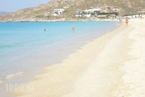 Studios Tasia_lowest prices_in_Hotel_Cyclades Islands_Naxos_Naxos chora