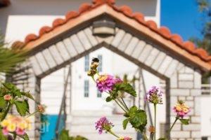 Miramare Apartments_holidays_in_Apartment_Crete_Chania_Platanias