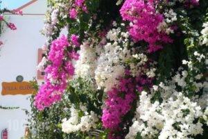 Villa Elizea_travel_packages_in_Crete_Chania_Agia Marina