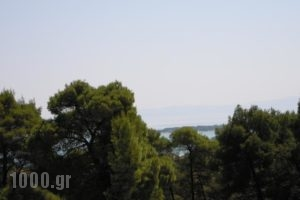 Dimitros Apartments_holidays_in_Apartment_Macedonia_Halkidiki_Chalkidiki Area