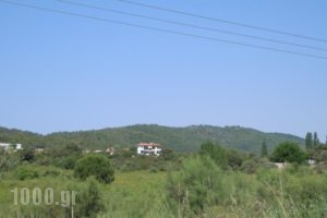 Dimitros Apartments_lowest prices_in_Apartment_Macedonia_Halkidiki_Chalkidiki Area