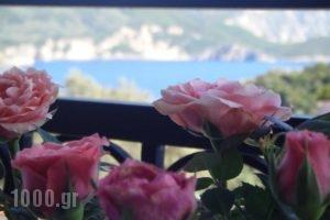 Paradise Apartments_holidays_in_Apartment_Ionian Islands_Corfu_Palaeokastritsa