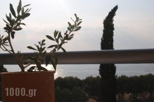 Hotel Kanellakis_best prices_in_Hotel_Thessaly_Magnesia_Pilio Area