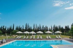Olea Mare_travel_packages_in_Macedonia_Halkidiki_Poligyros