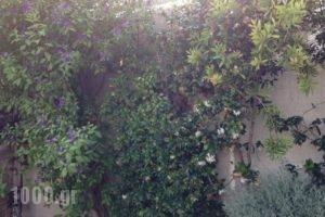 Villa Joannas_holidays_in_Villa_Ionian Islands_Lefkada_Vasiliki