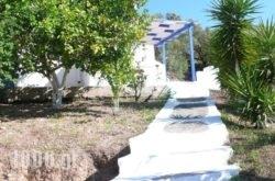 Stefanos Garden in Fournes, Chania, Crete