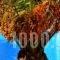 Zephyros_best deals_Hotel_Cyclades Islands_Sandorini_Sandorini Chora
