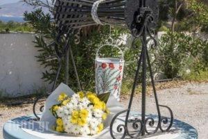 Kanelis Studios_best prices_in_Hotel_Cyclades Islands_Milos_Milos Chora