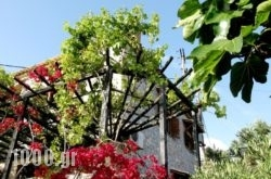 Papanestoras Apartments in Pilio Area, Magnesia, Thessaly